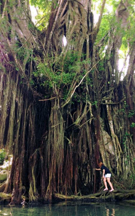 Century-old Enchanted Balete Tree, Siquijor